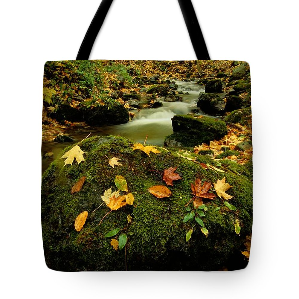 North America Tote Bag featuring the photograph Autumn View Shows Fallen Leaves by Raymond Gehman