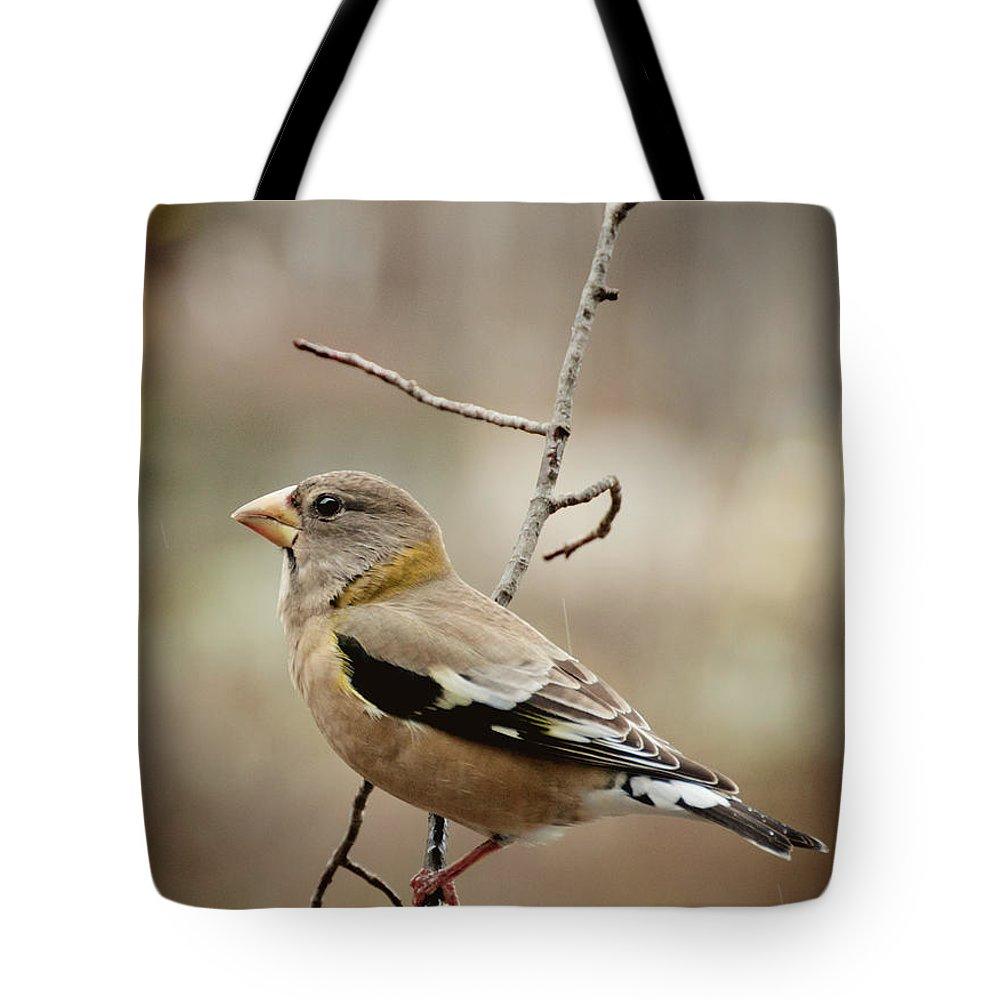 Grosbeak Tote Bag featuring the photograph Autumn Wildlife by Cheryl Baxter