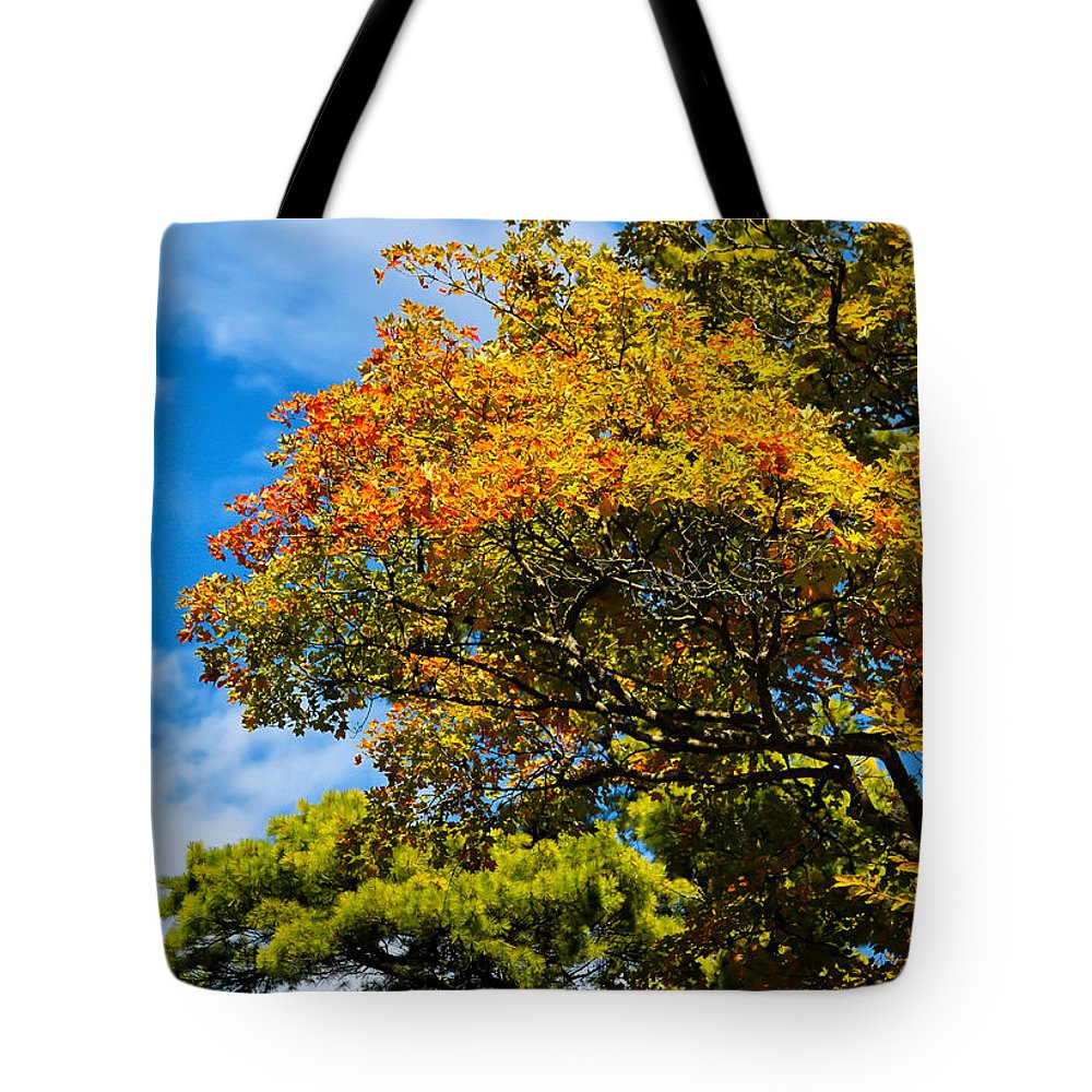 Autumnal Fruition Tote Bag featuring the photograph Autumnal Fruition by Rachel Cohen