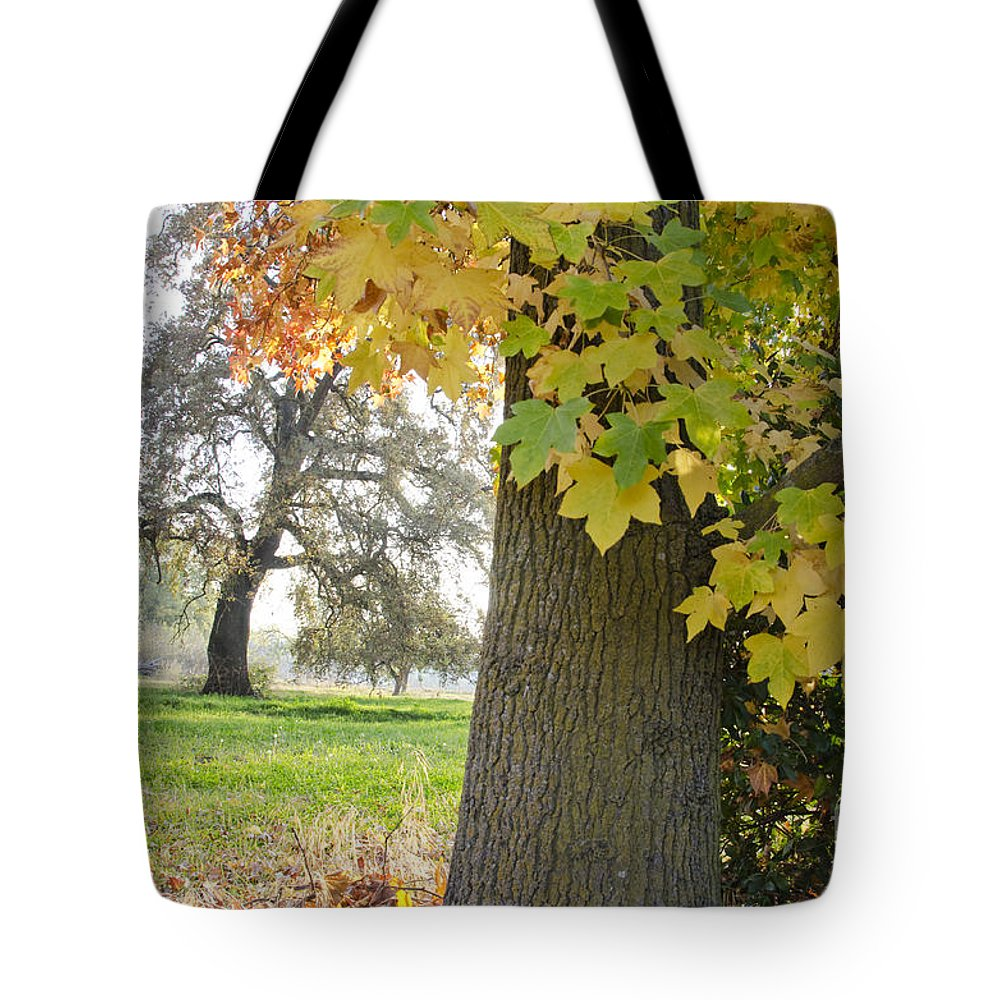 Autumn Tote Bag featuring the photograph Autumn's Gold by Jim And Emily Bush
