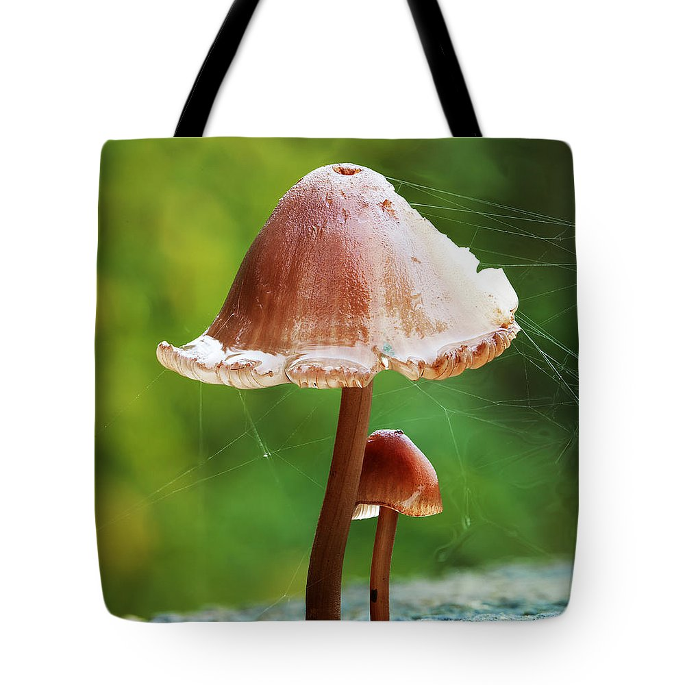Mushroom Tote Bag featuring the photograph Baby And Parent Mushroom by Simon Bratt Photography LRPS