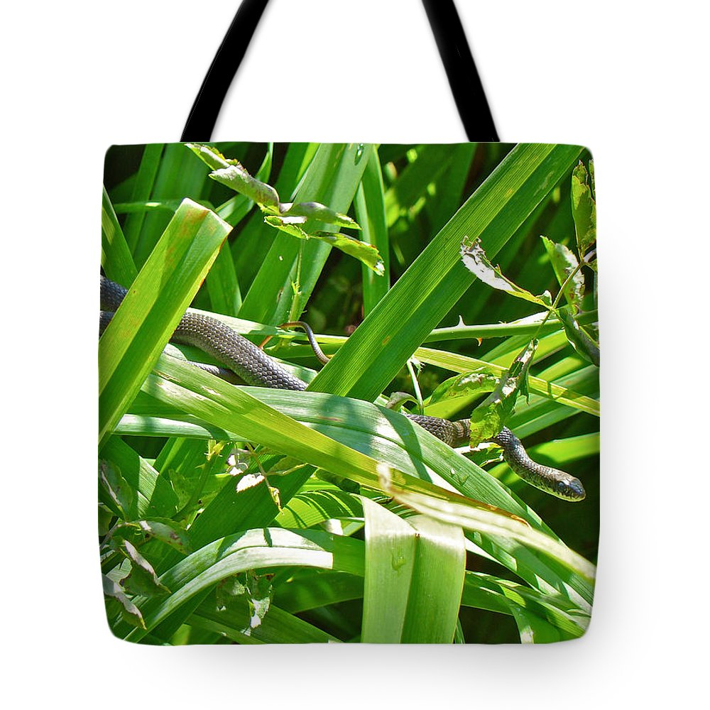 Snake Tote Bag featuring the photograph Baby Black Rat Snake - Elaphe Obsoleta Obsoleta by Mother Nature