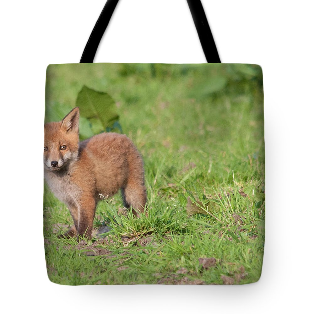 Dawn Oconnor Dawnoconnorphotos@gmail.com Tote Bag featuring the photograph Baby Fox by Dawn OConnor