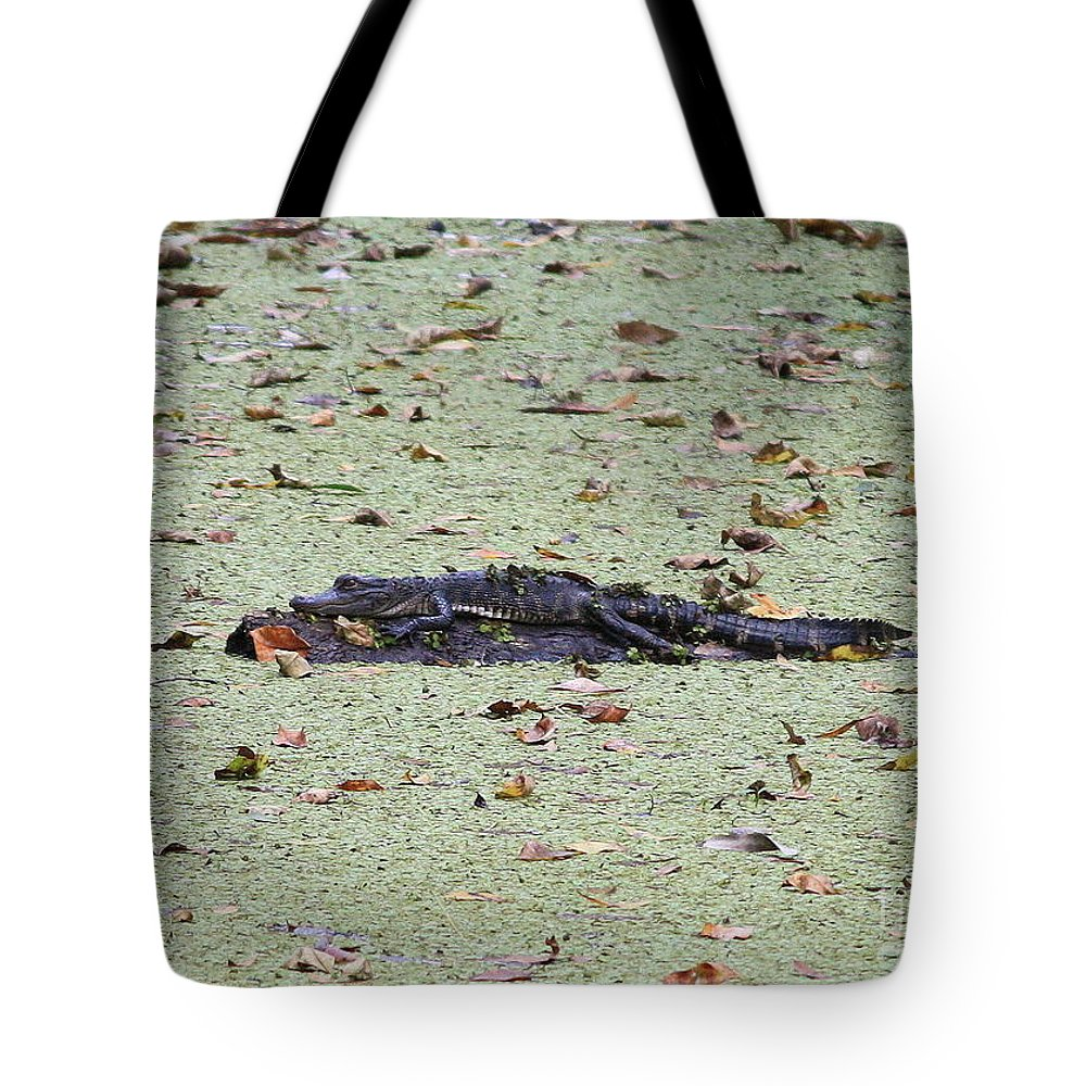 Gator Tote Bag featuring the photograph Baby Gator In The Swamp by Carol Groenen