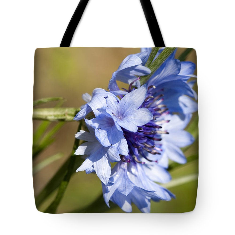 Centaurea Cyanus Tote Bag featuring the photograph Bachelor Button Blowin In The Wind by Kathy Clark