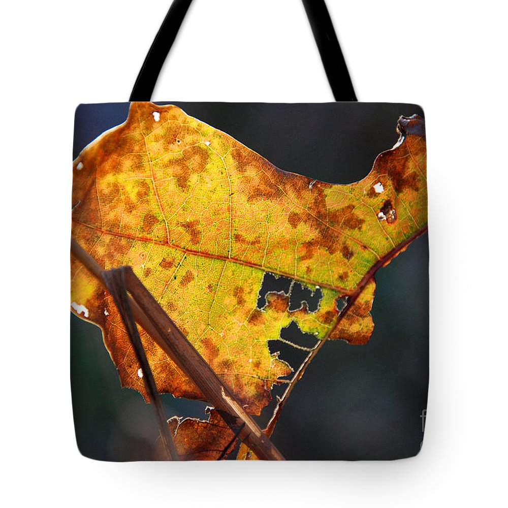 Golden Leaf Tote Bag featuring the photograph Back-lit Golden Leaf by Optical Playground By MP Ray