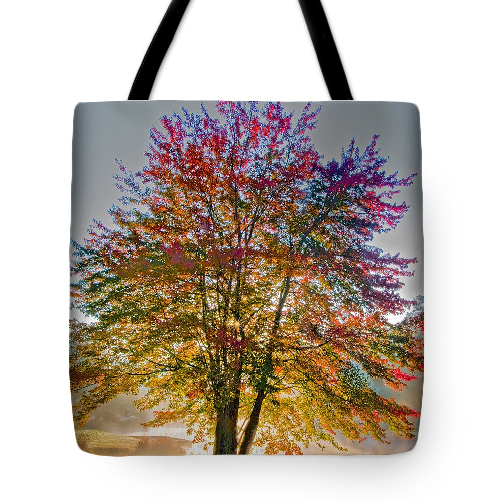 Maple Tote Bag featuring the photograph Backlit Maple In Autumn's Light by Rob Travis