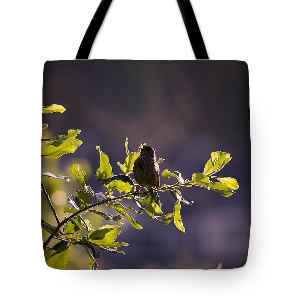 Bird Tote Bag featuring the photograph Backlit Song by Martin Cooper