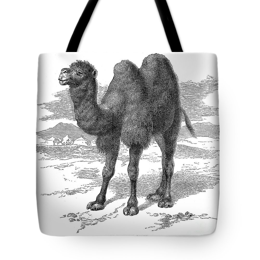 19th Century Tote Bag featuring the photograph Bactrian Camel by Granger