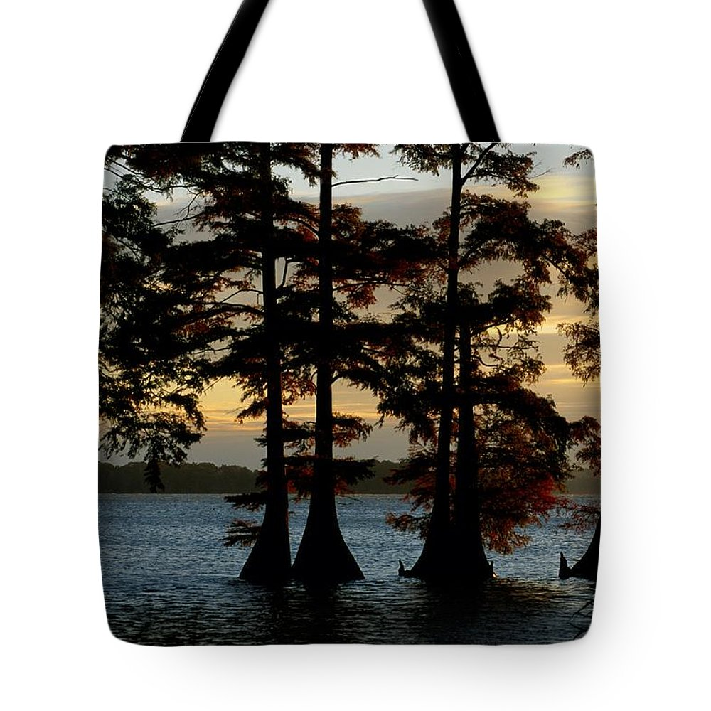 reelfoot National Wildlife Refuge Tote Bag featuring the photograph Bald Cypress Trees Growing by Raymond Gehman