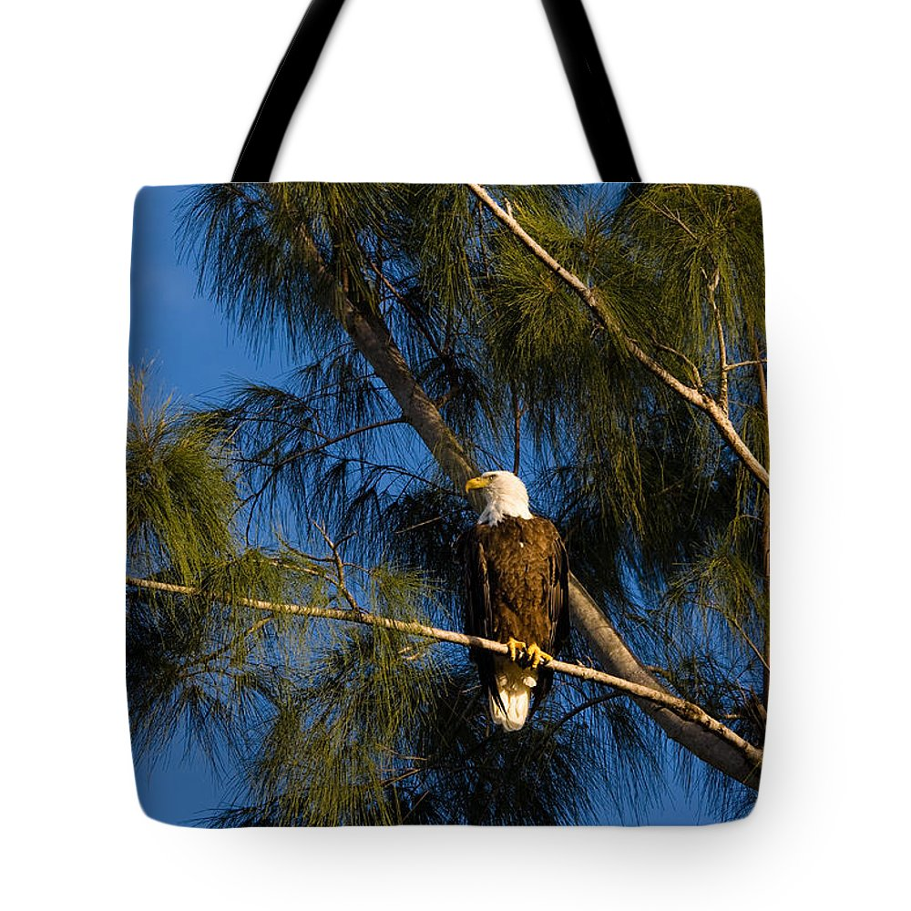 Bald Eagle Tote Bag featuring the photograph Bald Eagle by Ed Gleichman