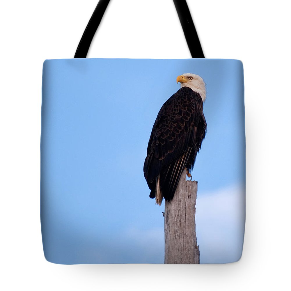 Bald Eagle Tote Bag featuring the photograph Bald Eagle On The Lookout by Christine Stonebridge