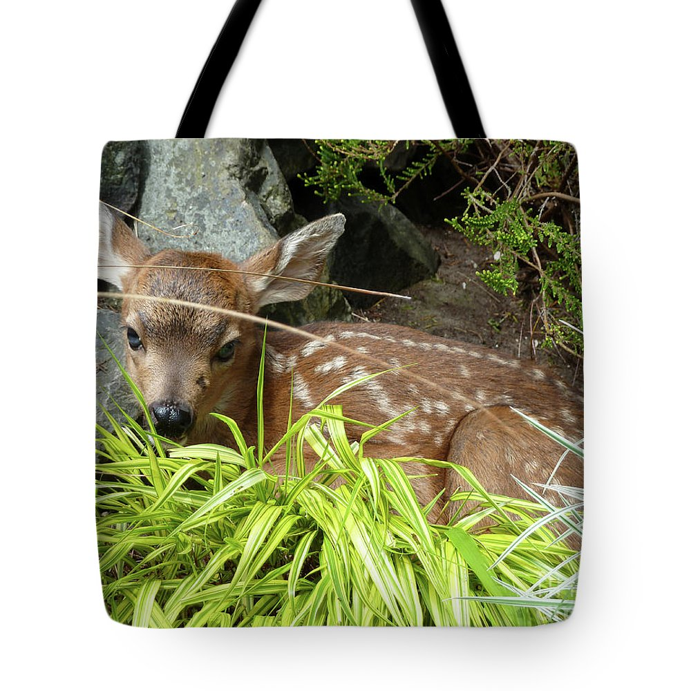 Animal Tote Bag featuring the photograph Bambino by Lauren Leigh Hunter Fine Art Photography