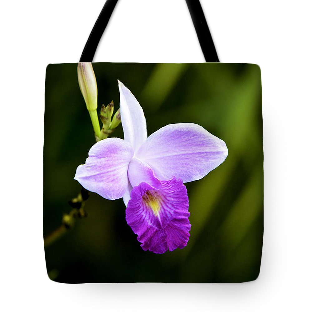 Costa Rica Tote Bag featuring the photograph Bamboo Orchid by Leon Roland