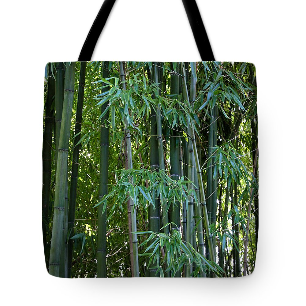 Bamboo Tote Bag featuring the photograph Bamboo Tree by Athena Mckinzie
