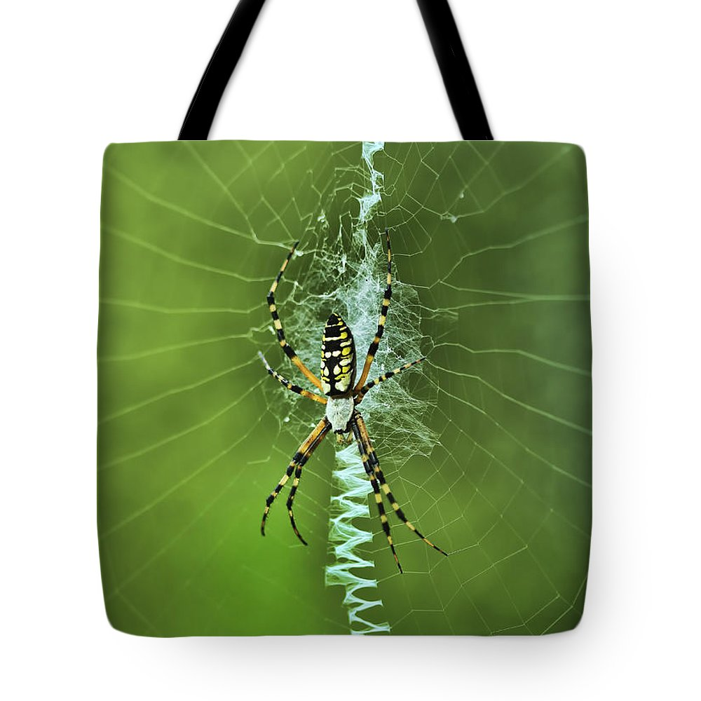 Spider Tote Bag featuring the photograph Banana Spider With Web by Deborah Benoit