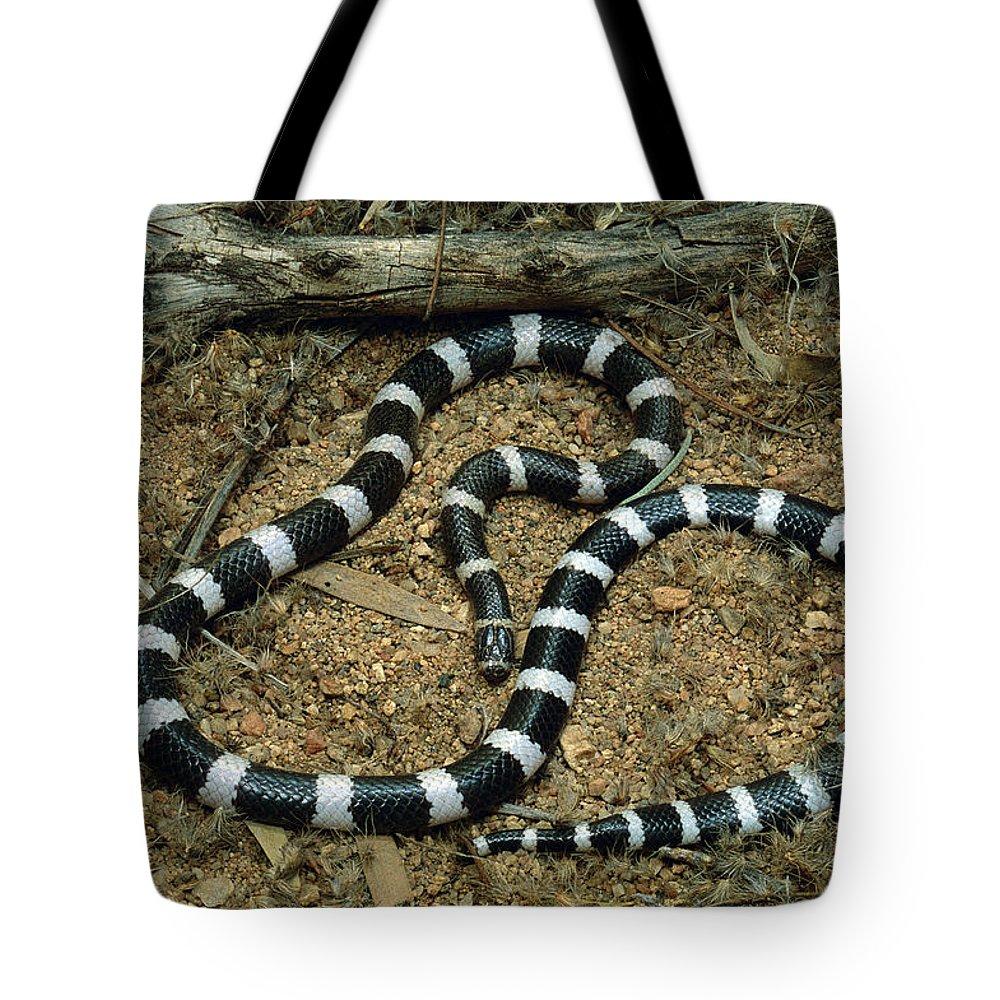 Ai Tote Bag featuring the photograph Bandy-bandy Vermicella Annulata by Jean-Paul Ferrero