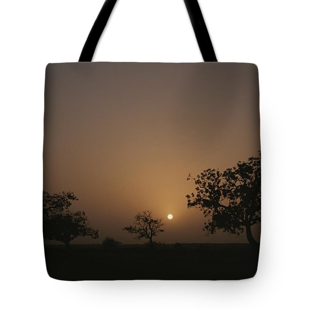 Africa Tote Bag featuring the photograph Baobab Trees Adansonia Digitata by Bobby Model