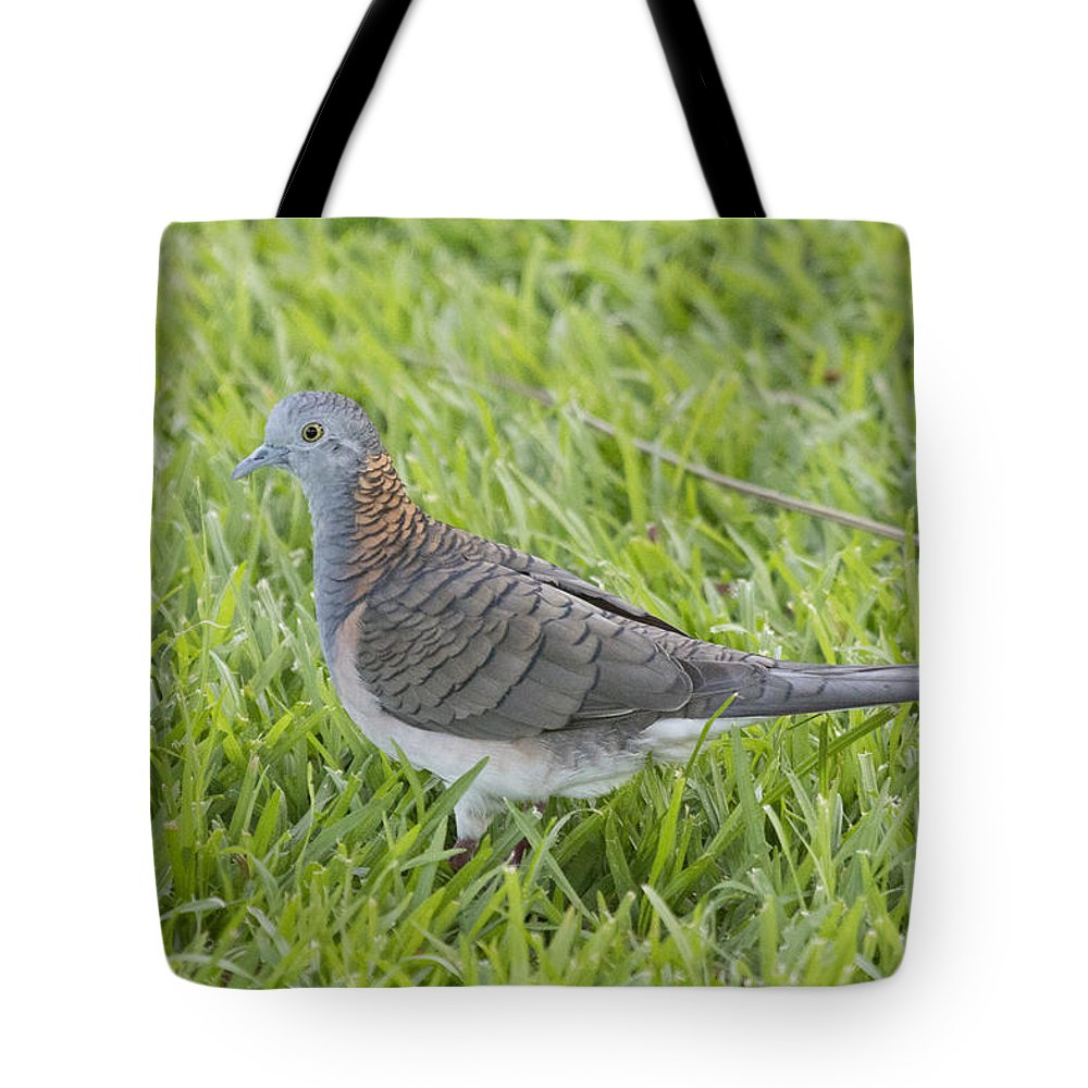 Bar-shouldered Dove Tote Bag featuring the photograph Bar-shouldered Dove by Douglas Barnard
