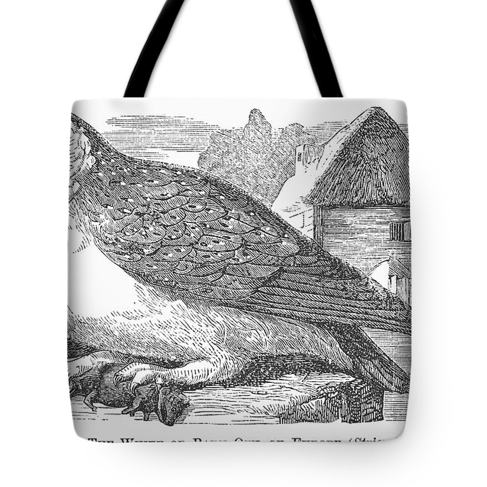 1877 Tote Bag featuring the photograph Barn Owl, 1877 by Granger
