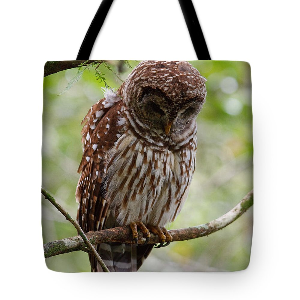 Barred Owl Tote Bag featuring the photograph Barred Owl by Joe Elliott