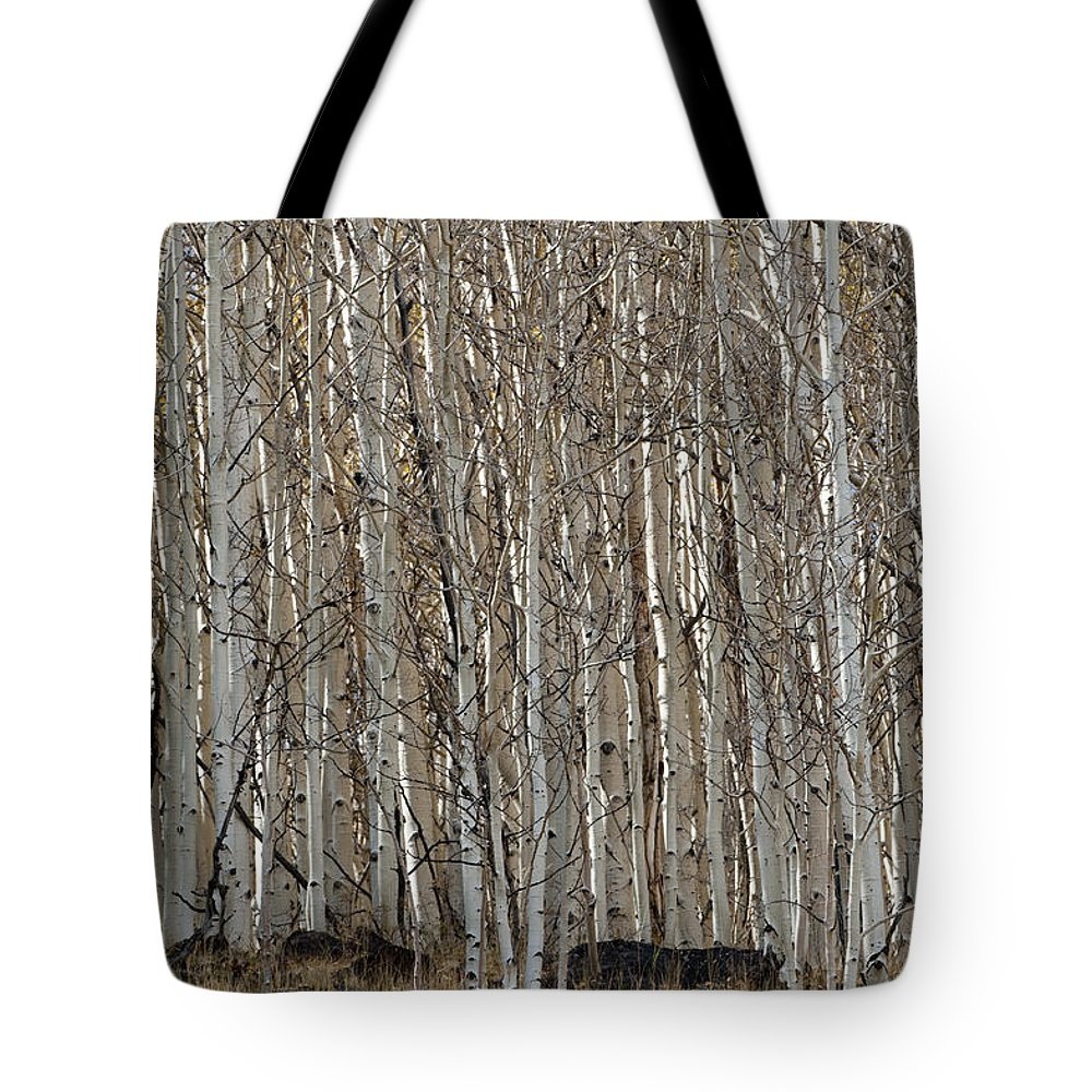 Sandra Bronstein Tote Bag featuring the photograph Barren Aspen by Sandra Bronstein