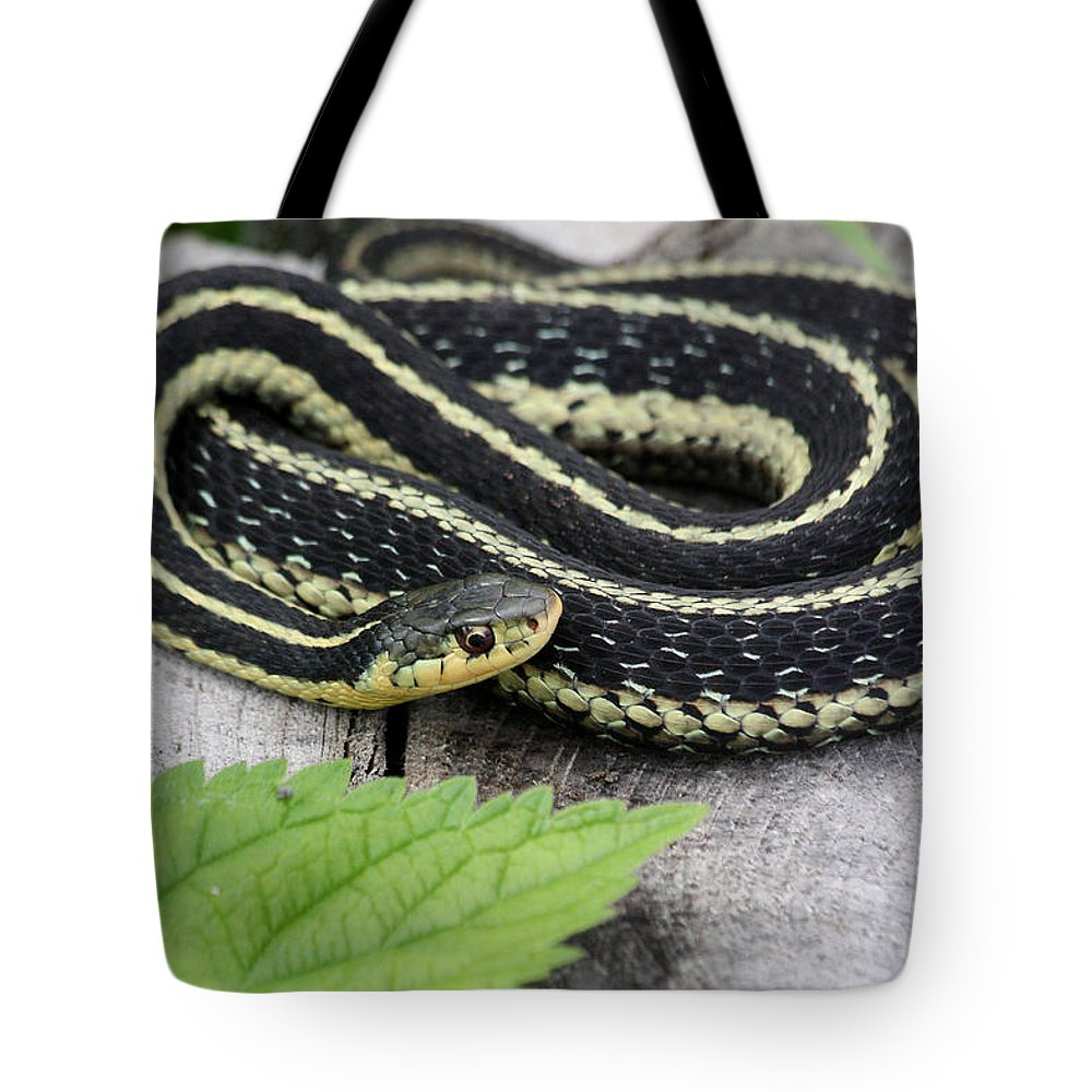 Garter Snake Tote Bag featuring the photograph Basking by Doris Potter