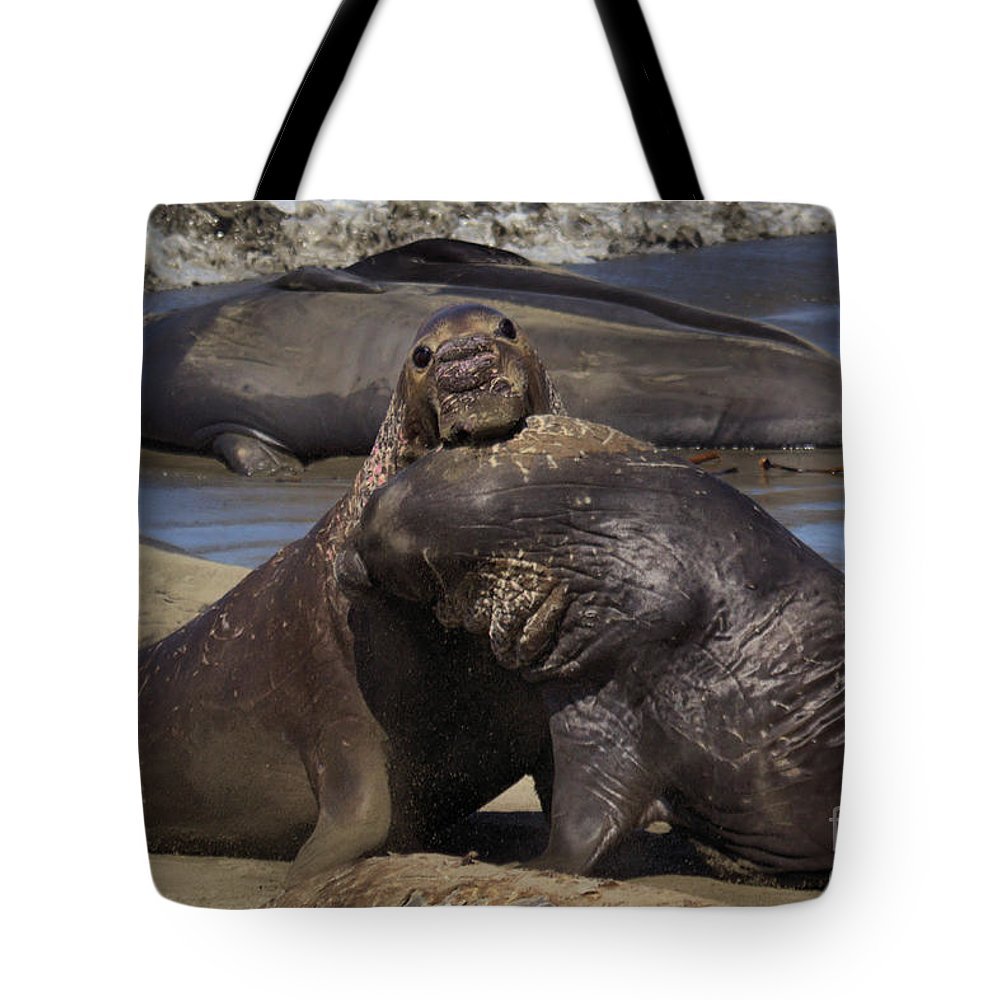 Elephant Seals Tote Bag featuring the photograph Battle On by James Anderson