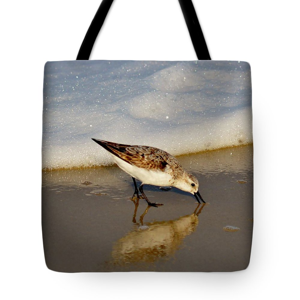 Animal Tote Bag featuring the photograph Beach Bird by William Bartholomew