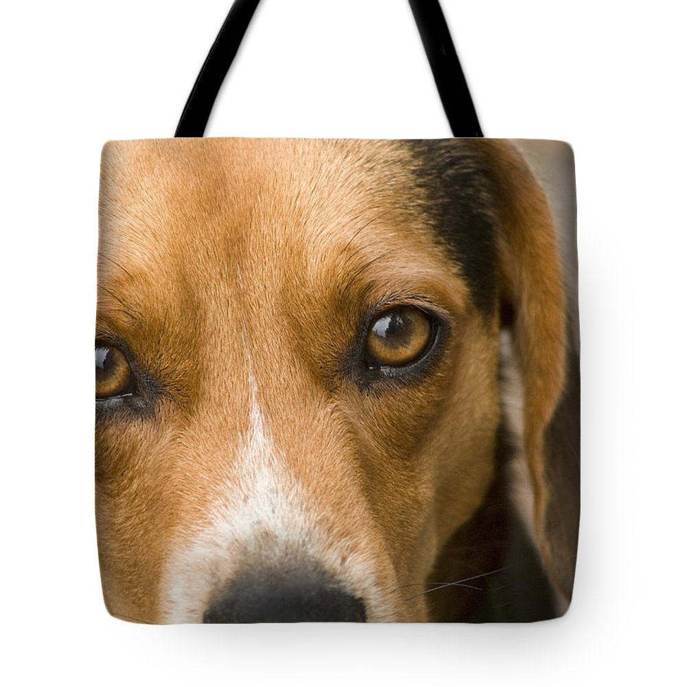 Dog Tote Bag featuring the photograph Beagle Hound Dog Eyes Of Love by Kathy Clark