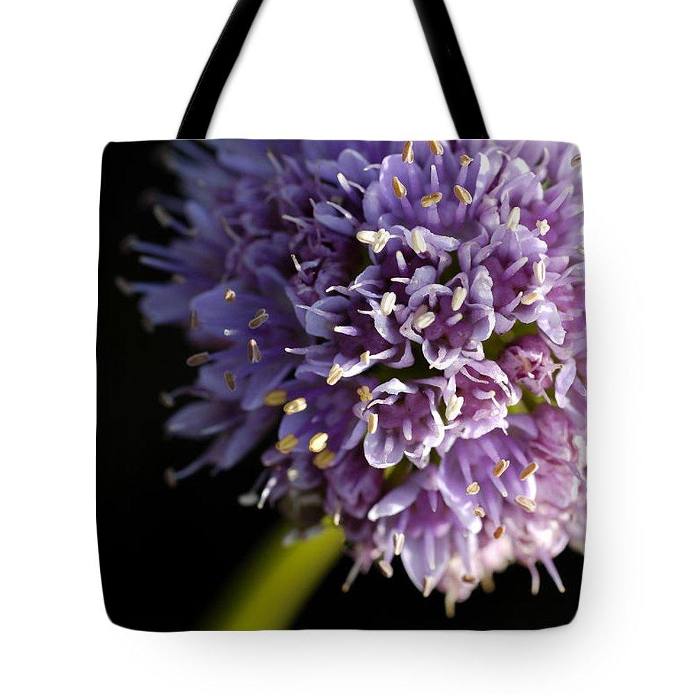 Flower Tote Bag featuring the photograph Beautiful Purple Flower Allium Senescens by Matthias Hauser