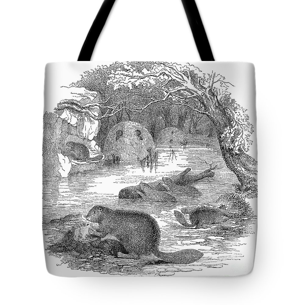19th Century Tote Bag featuring the photograph Beavers by Granger