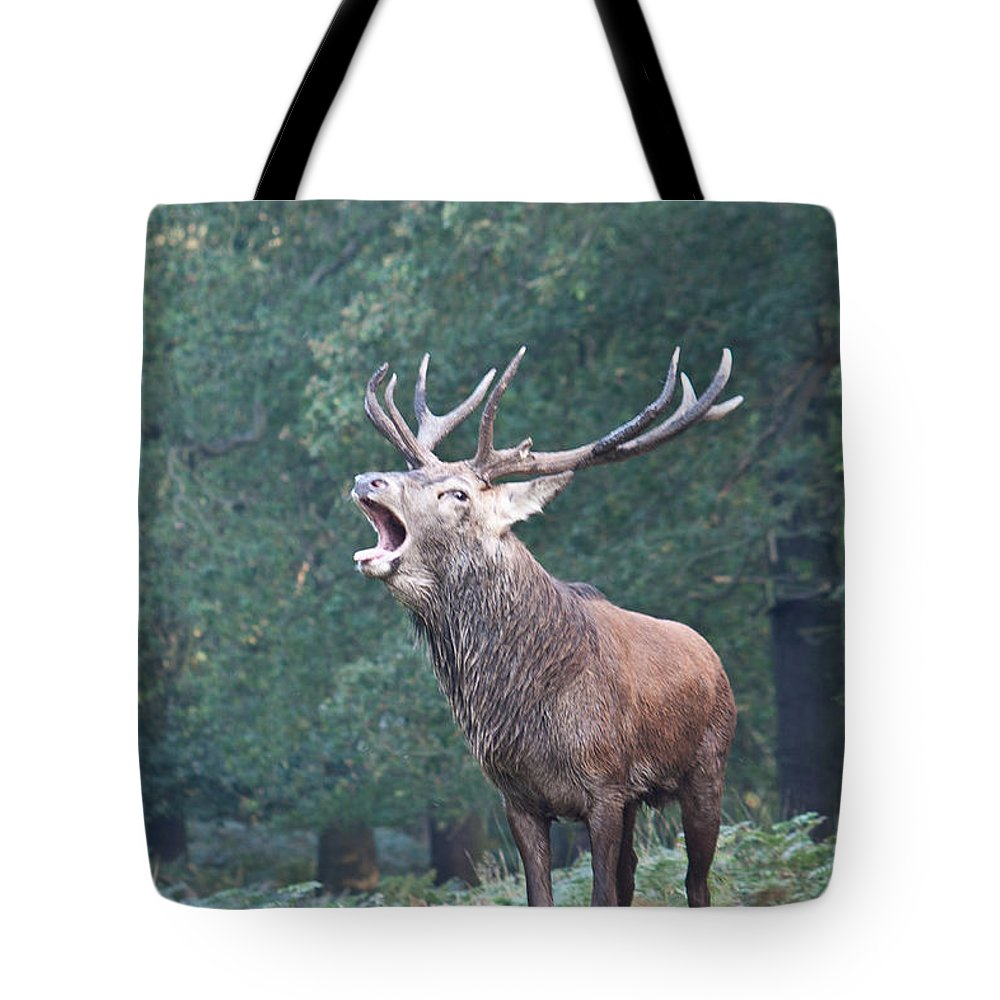 Stag Tote Bag featuring the photograph Bellowing Red Deer Stag by Dawn OConnor