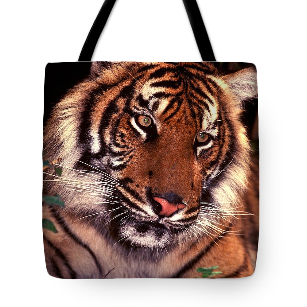 Tiger Tote Bag featuring the photograph Bengal Tiger In Thought by Paul W Faust - Impressions of Light