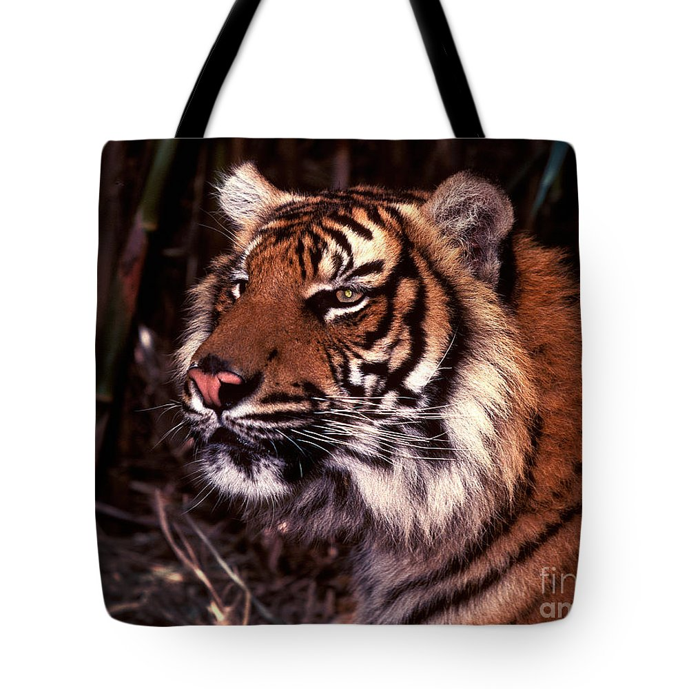 Tiger Tote Bag featuring the photograph Bengal Tiger Watching Prey by Paul W Faust - Impressions of Light