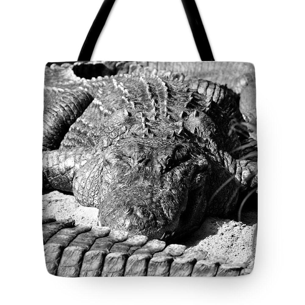 Fine Art Photography Tote Bag featuring the photograph Big Boys by David Lee Thompson