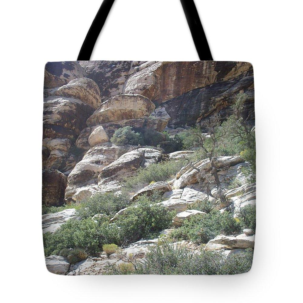 Sheep Tote Bag featuring the photograph Big Horn Sheep by Jonathan Barnes