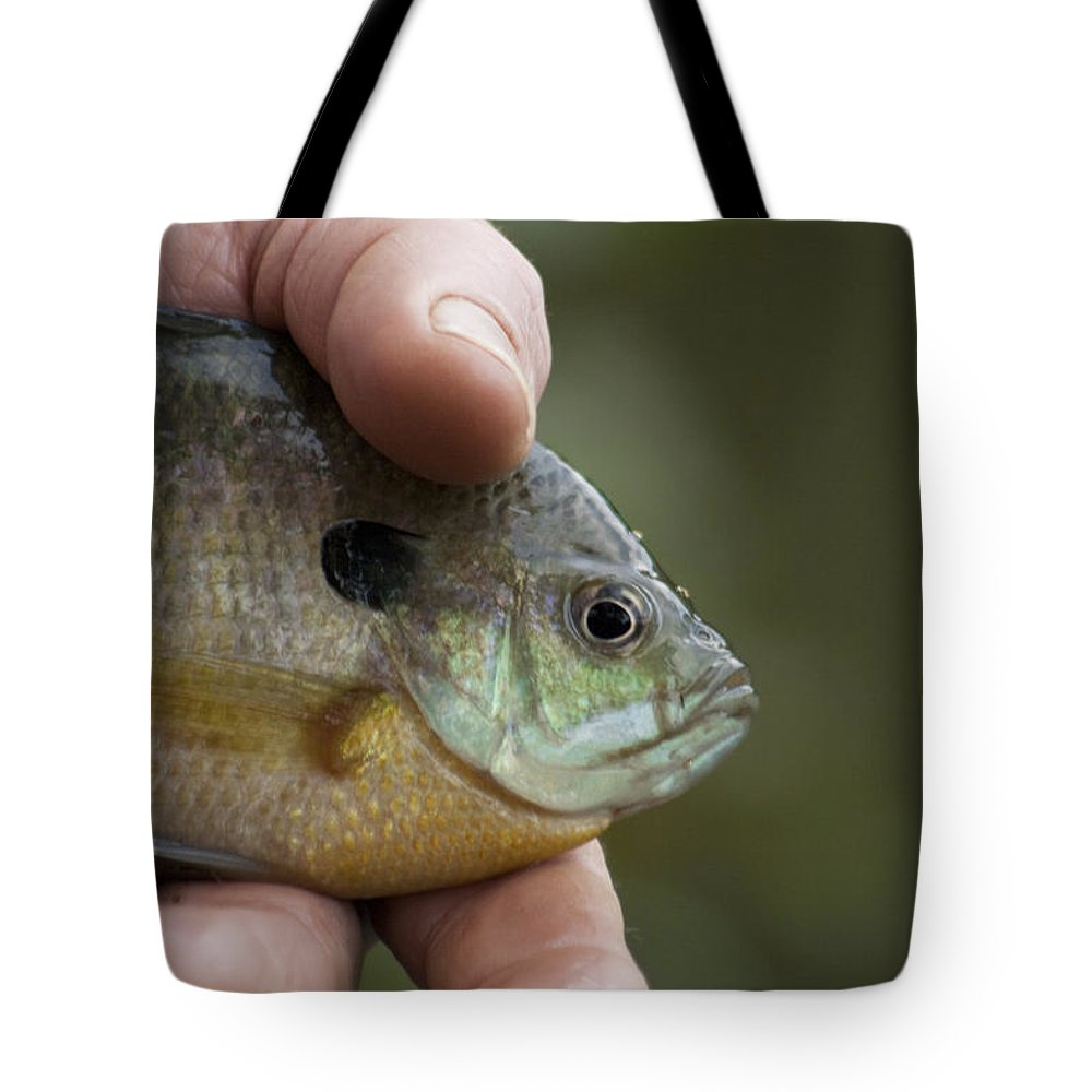 Centrarchidae Tote Bag featuring the photograph Big Man Hand - Little Crappie by Kathy Clark