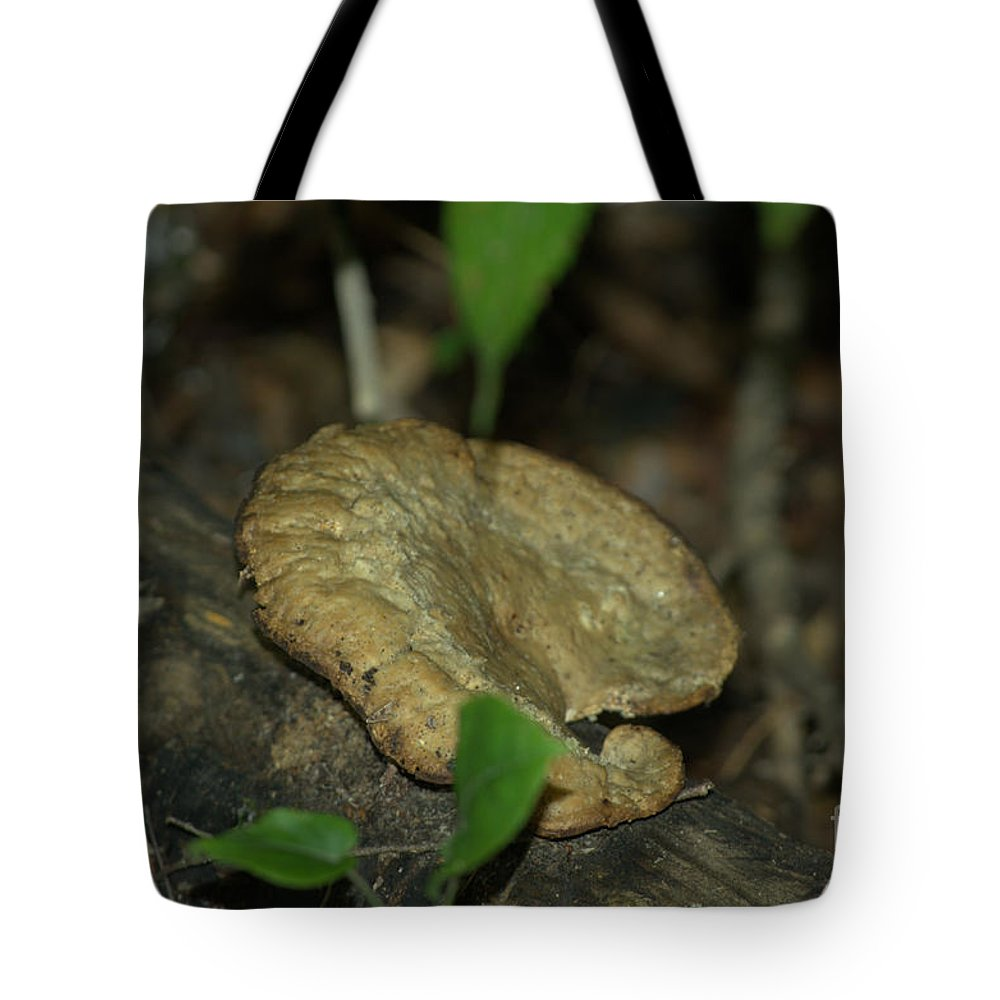 Mushroom Tote Bag featuring the photograph Big Old Mushroom by Donna Brown