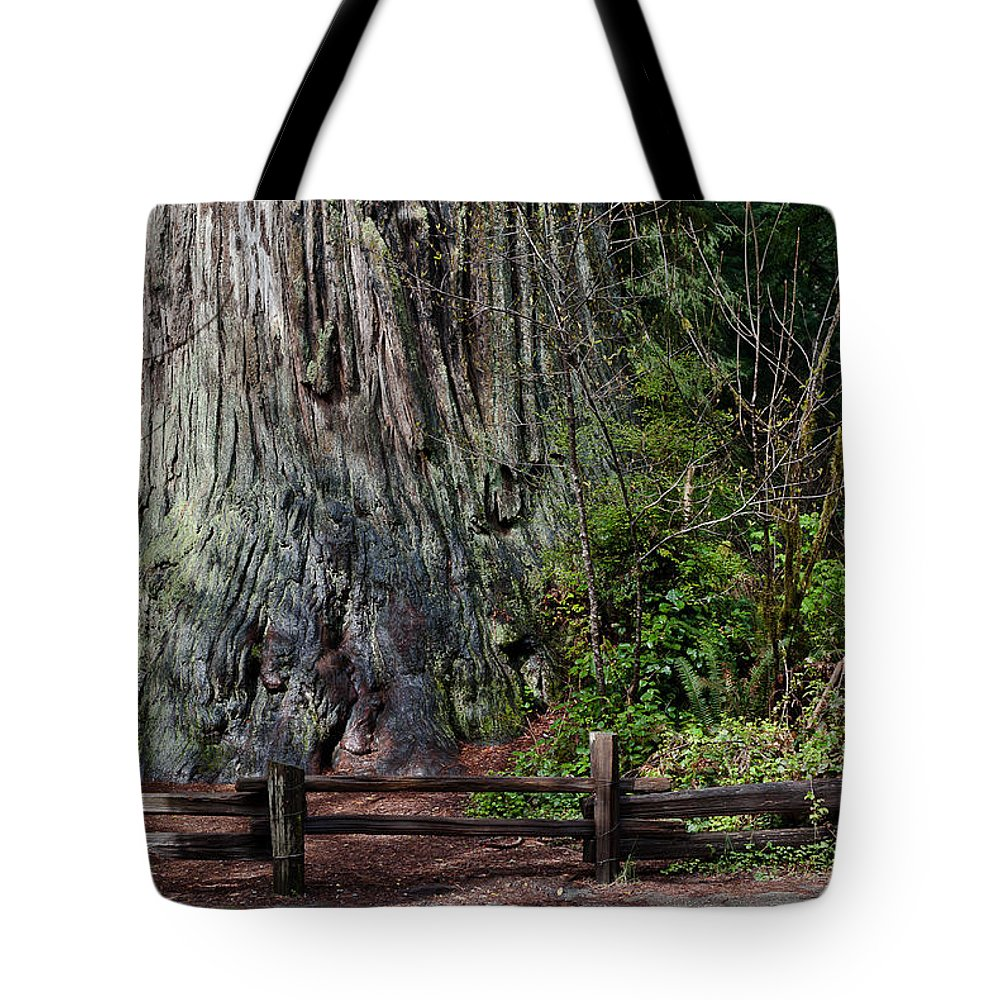 Redwoods Tote Bag featuring the photograph Big Tree by Greg Nyquist
