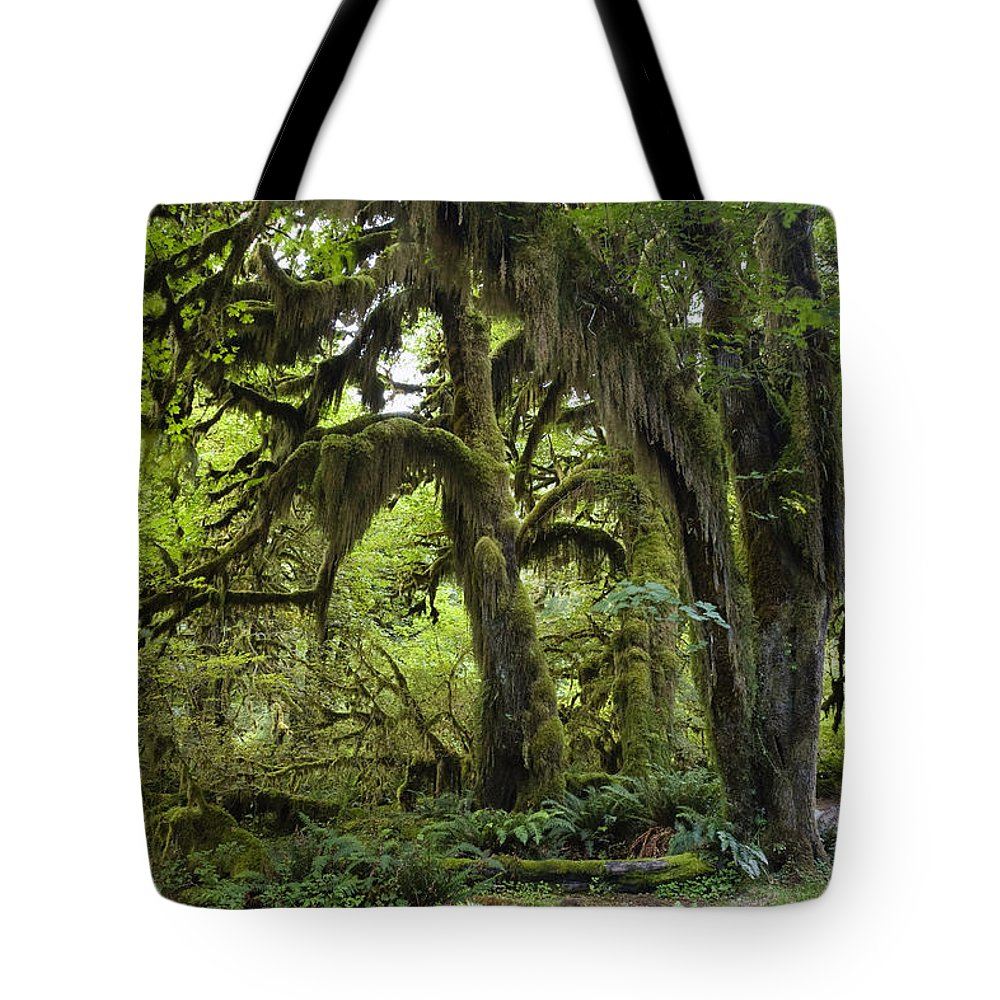 Mp Tote Bag featuring the photograph Bigleaf Maple Acer Macrophyllum by Konrad Wothe