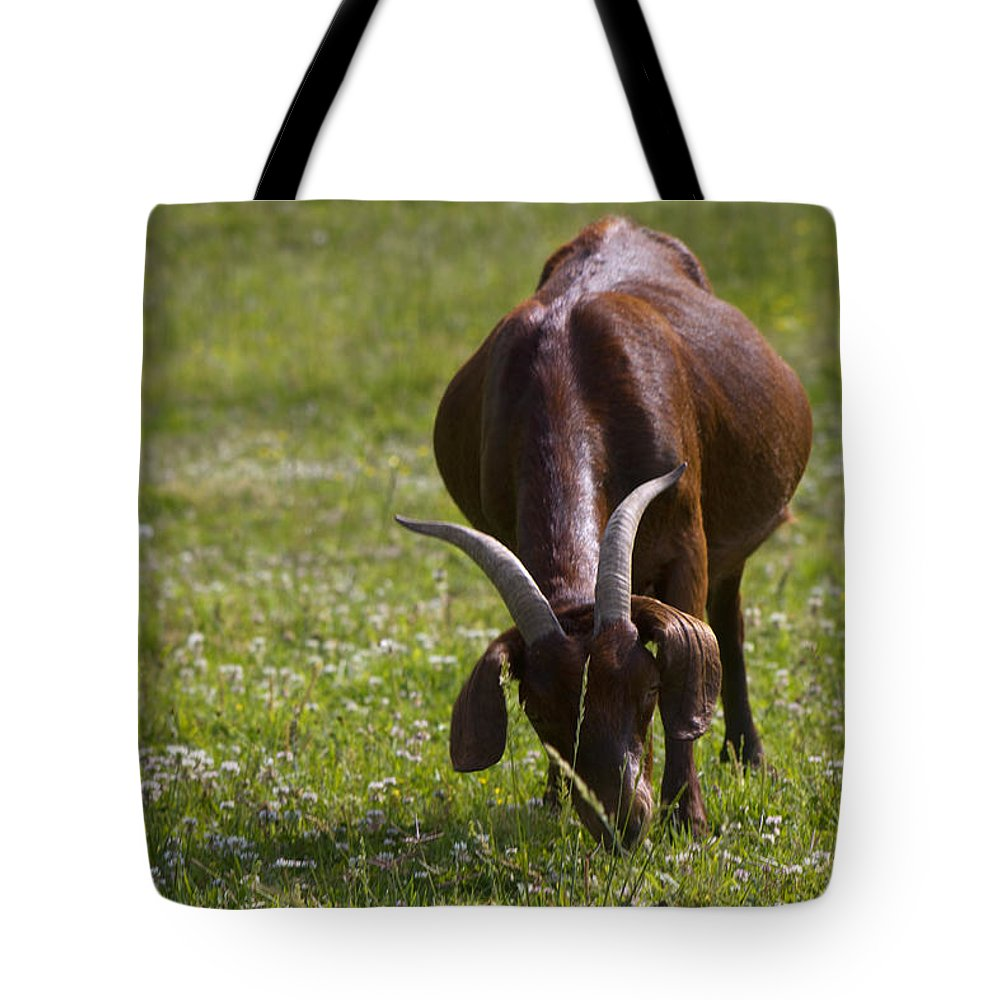Capra Aegagrus Hircus Tote Bag featuring the photograph Billy Goat Or Nanny Goat by Kathy Clark