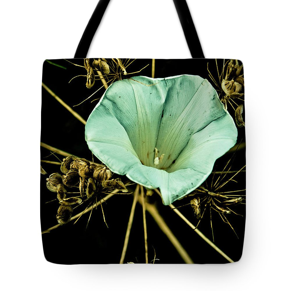 Bindweed Tote Bag featuring the photograph Bindweed And Seed Heads by Grebo Gray