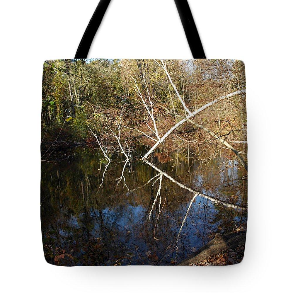 Usa Tote Bag featuring the photograph Birch Eye by LeeAnn McLaneGoetz McLaneGoetzStudioLLCcom