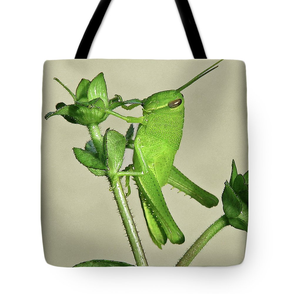 Nature Tote Bag featuring the photograph Bird Grasshopper Nymph by Peg Urban