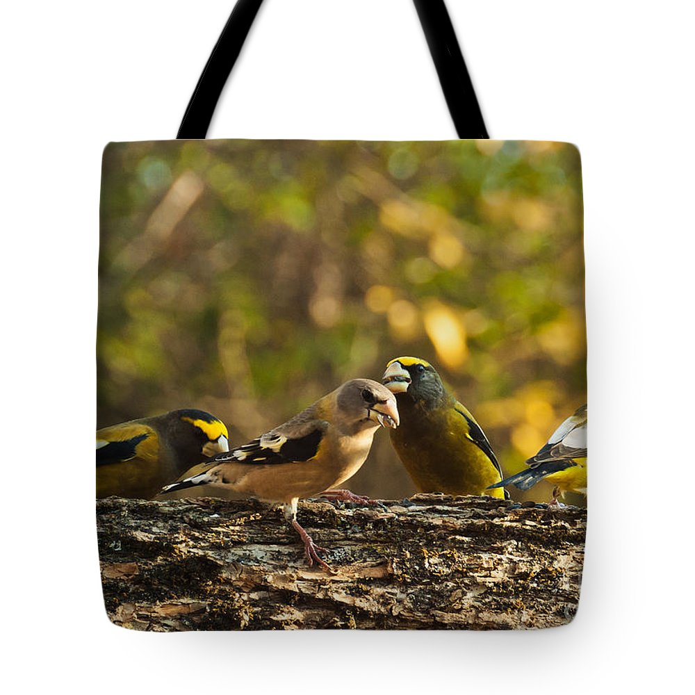 Grosbeaks Tote Bag featuring the photograph Birds Of Yellow by Cheryl Baxter
