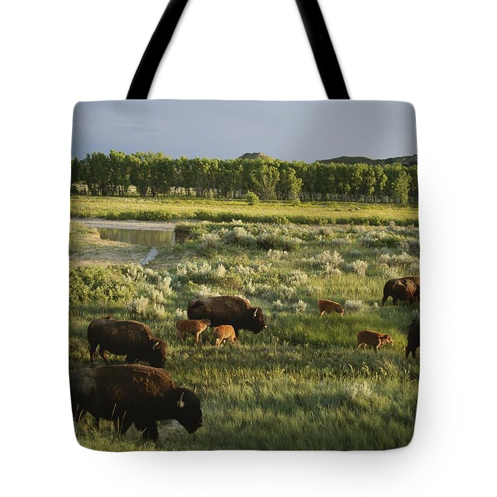 Geography Tote Bag featuring the photograph Bison Graze On Grasslands In The Park by Michael Melford