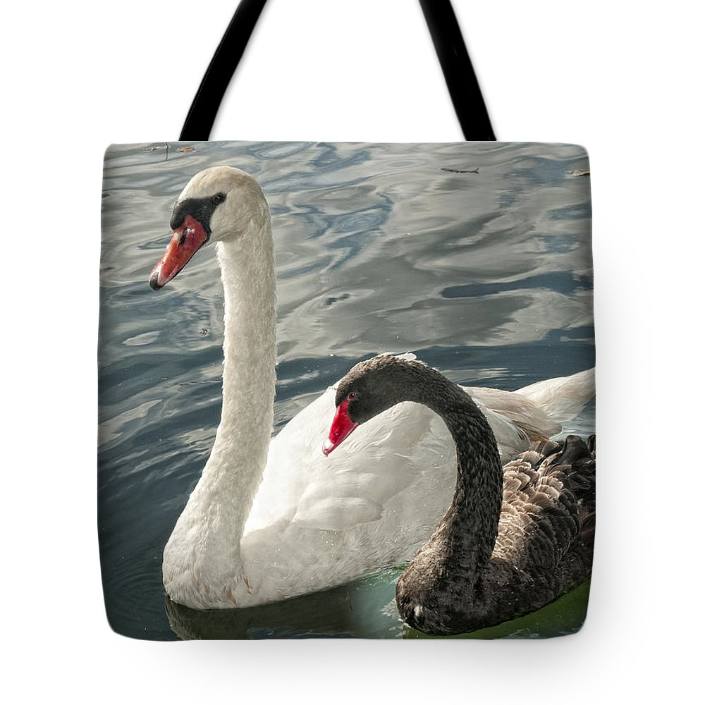 Swans Tote Bag featuring the photograph Black And White In Color by Barbara Middleton