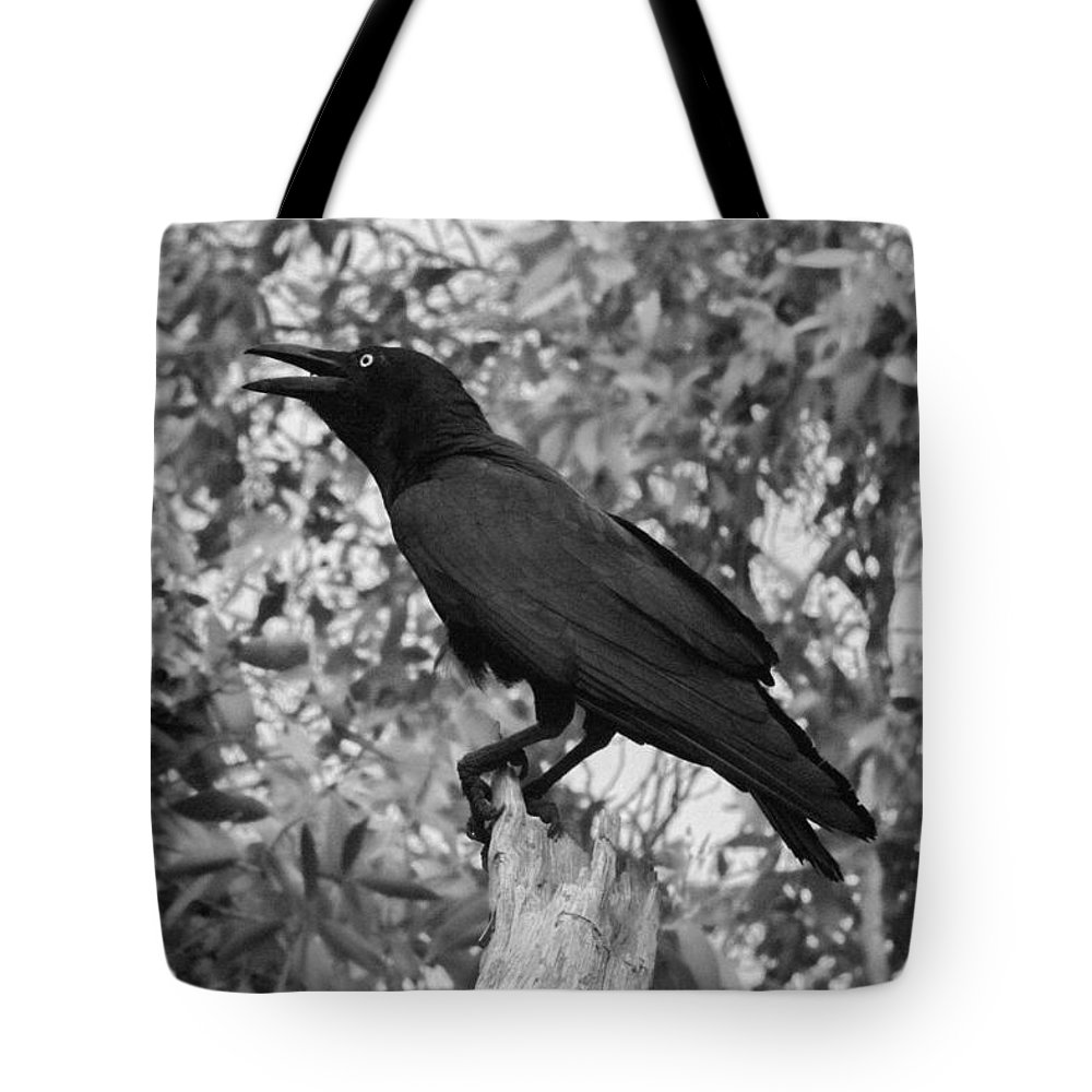 Raven Tote Bag featuring the photograph Black As The Night by Douglas Barnard