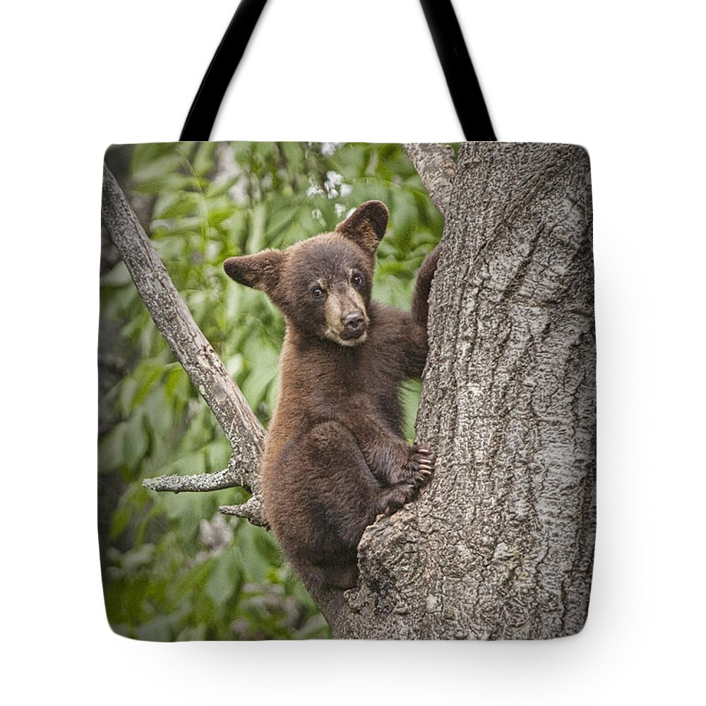 Black Bear Tote Bag featuring the photograph Black Bear Cub Hanging On by Randall Nyhof
